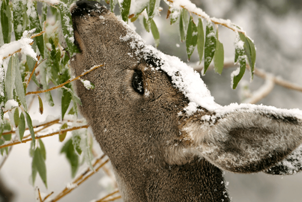 Protect Winter Shrubs
